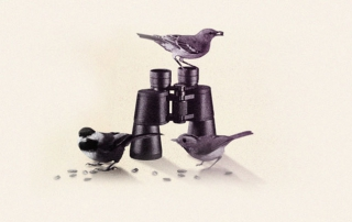 bird_news_1